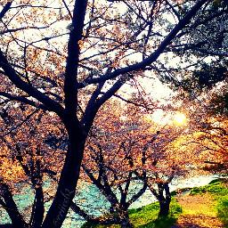 flower nature spring sunset