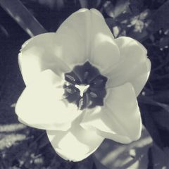 black & white flower nature photography spring