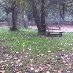 amol iran forest bench autumn