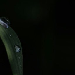 canon nature macro minimal drop