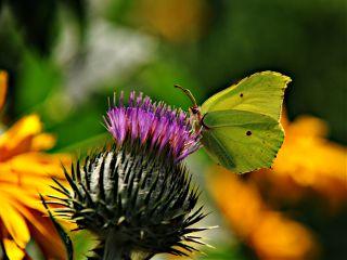 butterfly garden summer photography pets & animals
