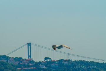 worldphotoday photography istanbul seagull bird