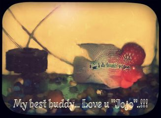 mypet love buddy