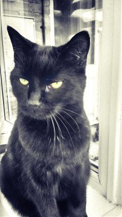 cat pets & animals