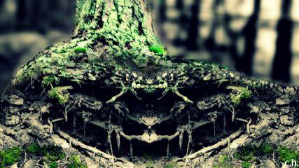 earthphoto photography mirroreffect