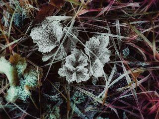 winter colorsplash snowscape nature colorful