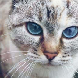 eyes cat animal pets nature