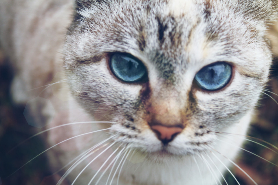 #eyes #cat #animal #pets #nature #photography  I love this cat!!!
