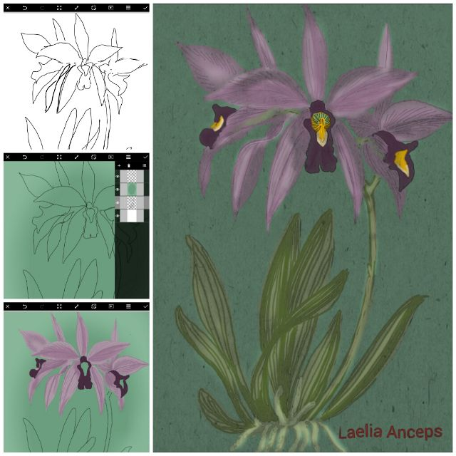 orchid drawing steps