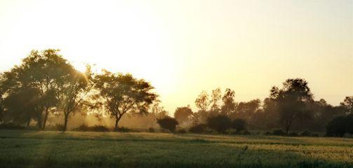 nature sunset travel tree sun