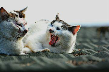 kedi cat cats
