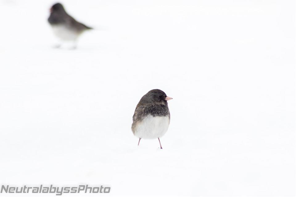 More birds! #photography #nature #colorful #winter #snow #bird